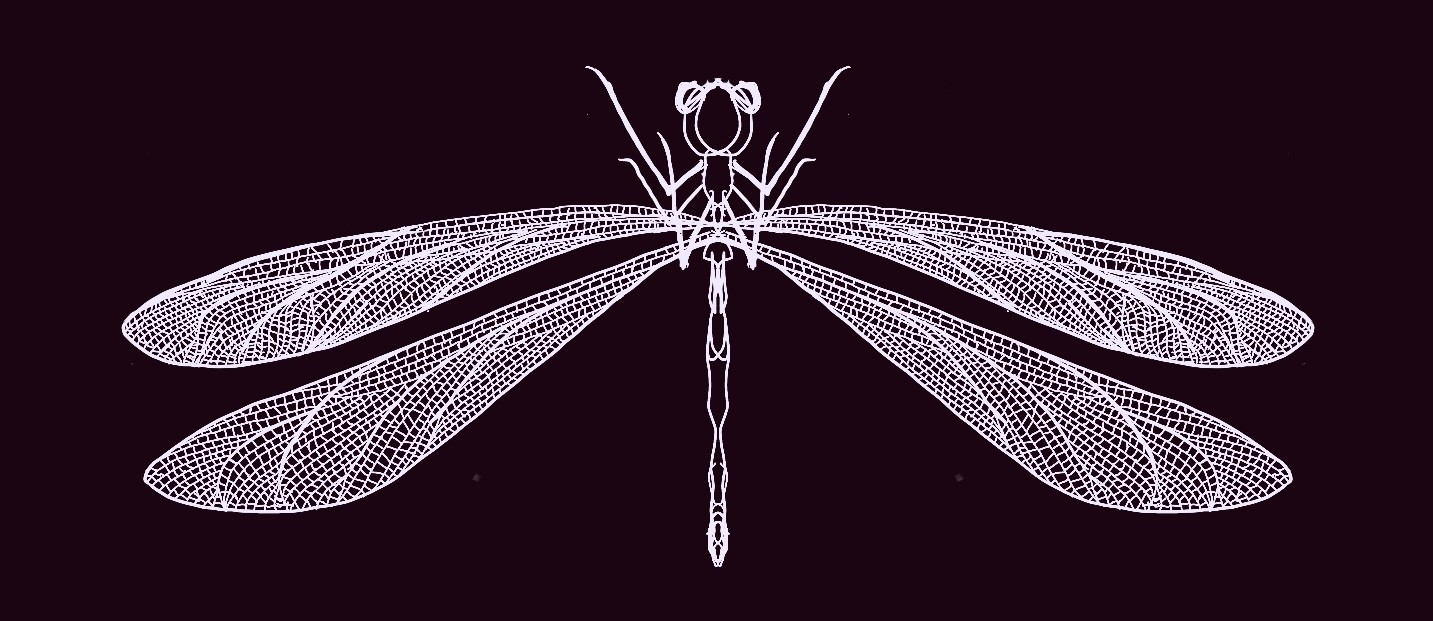 Drawing of a damselfly in white on a black background